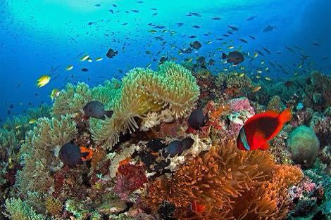 diving phillipines